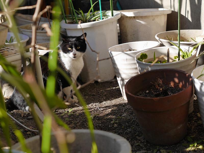 花バケツと黒白猫1