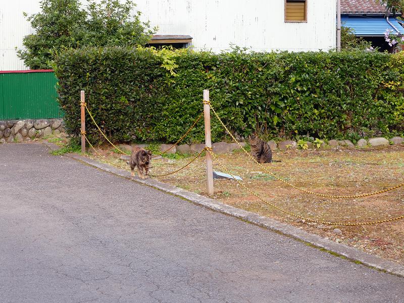 裏路地で再会した猫2匹
