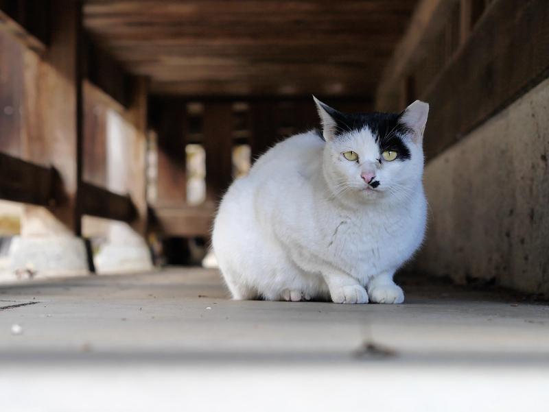 濡れ縁の下の白黒猫