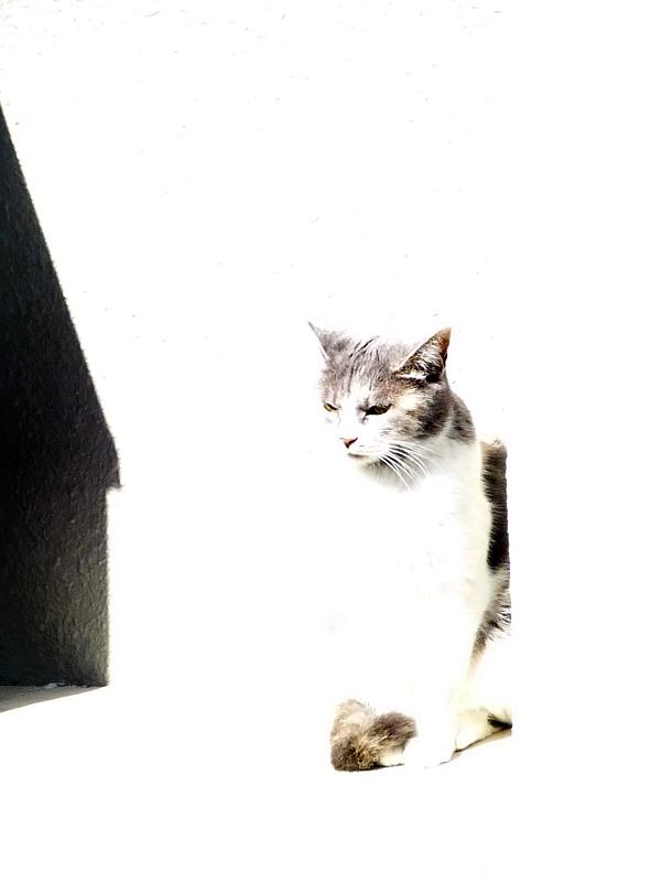 アパート壁と三毛猫1