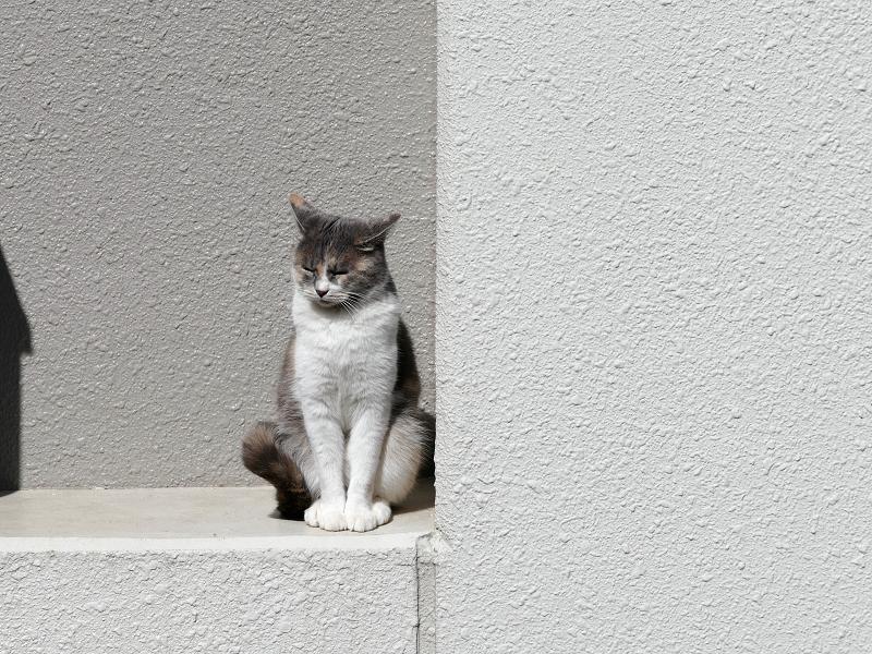 アパート壁と三毛猫2