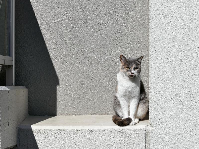 アパート壁と三毛猫3
