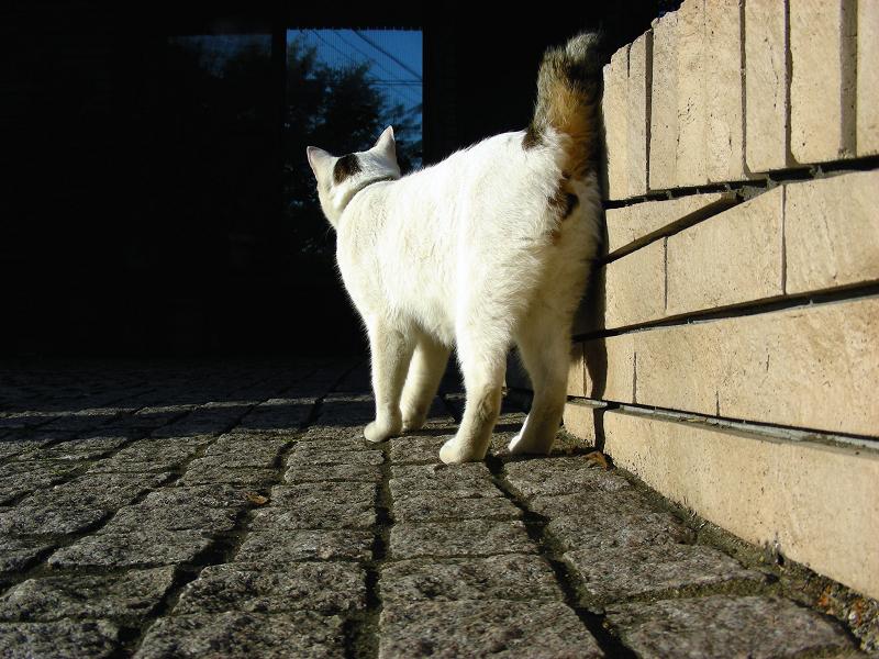 ガレージの白キジ猫1