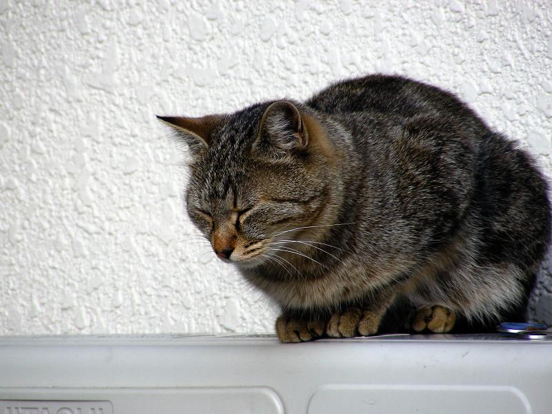 室外機の上で佇むキジトラ猫1