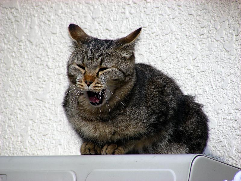 室外機の上で佇むキジトラ猫2