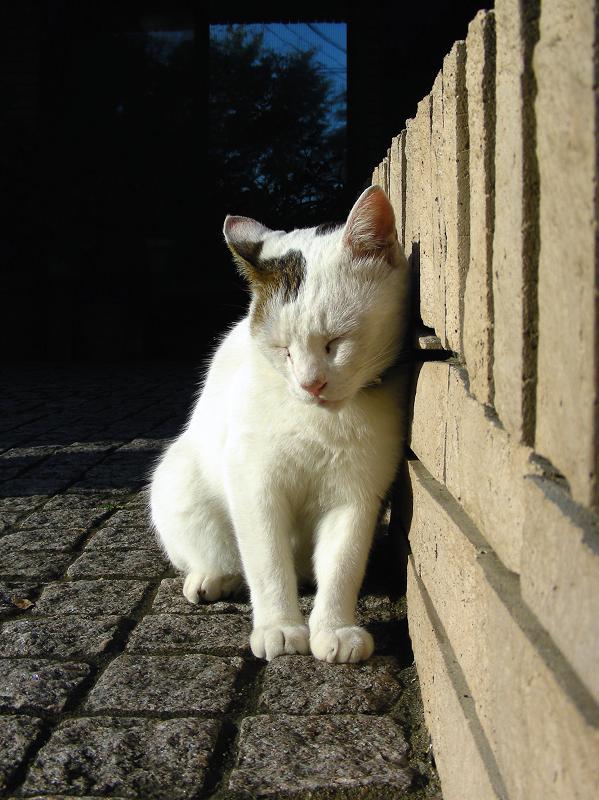 ガレージの白キジ猫3