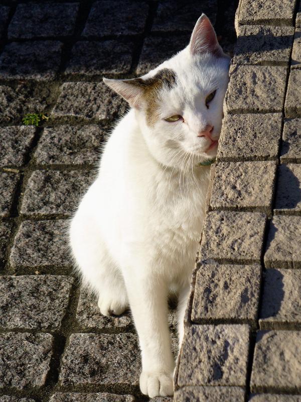 ガレージの白キジ猫4