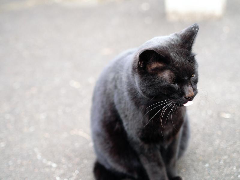 黒猫ベロ出し