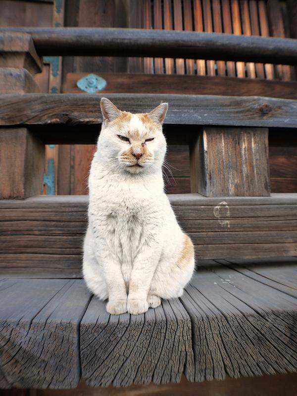 濡れ縁の外側にいた茶白猫4