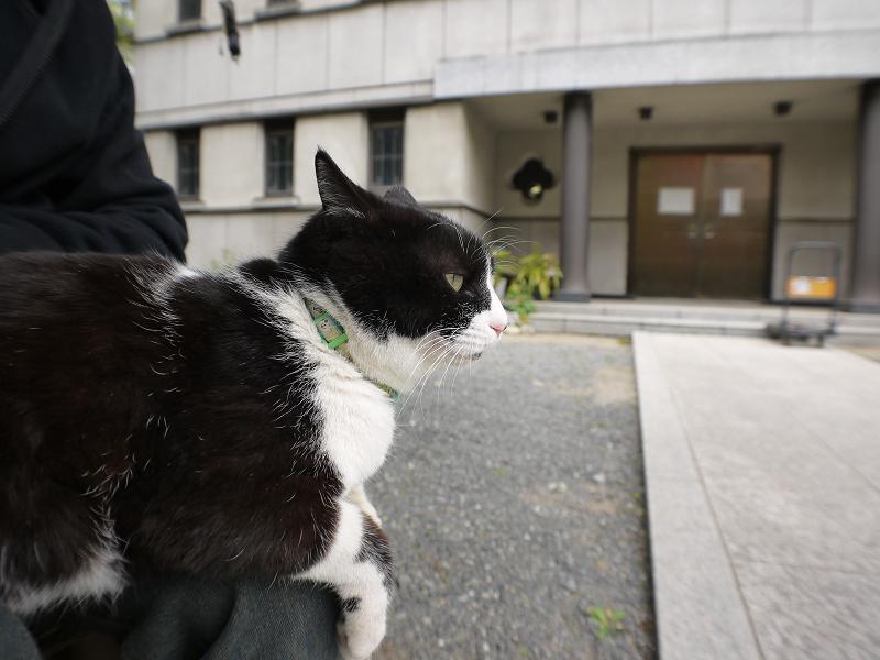 境内で膝に乗ってる黒白猫1