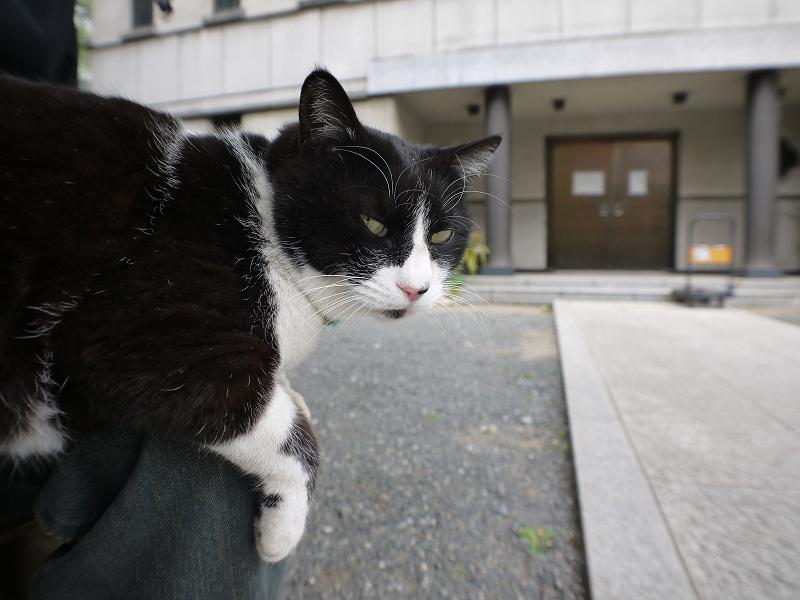 境内で膝に乗ってる黒白猫2