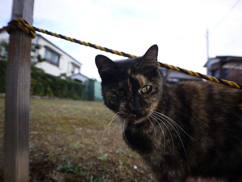 裏路地で再会したサビ柄猫1