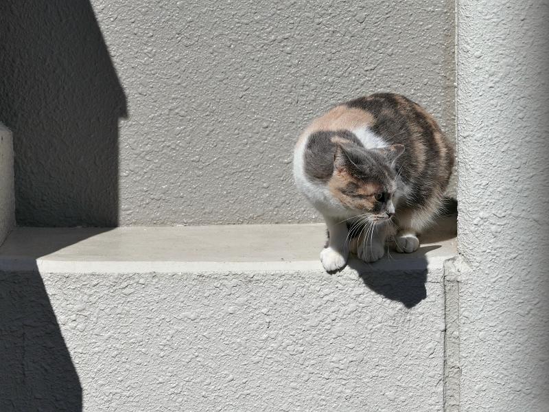 陽が当たるアパート壁と三毛猫1