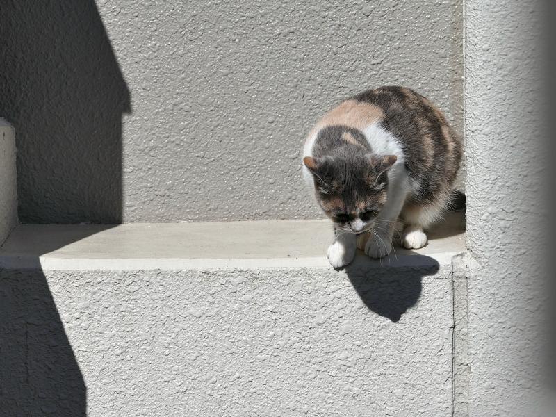 陽が当たるアパート壁と三毛猫2
