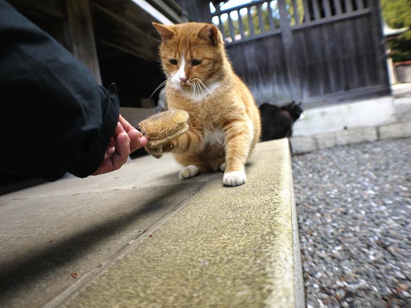 タワシで遊ぶ茶白猫2