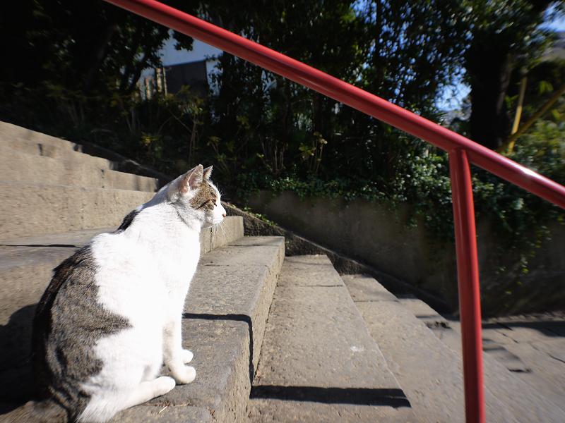お寺の階段で出会ったキジ白猫2