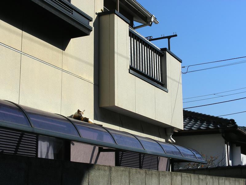 民家屋根と三毛猫1