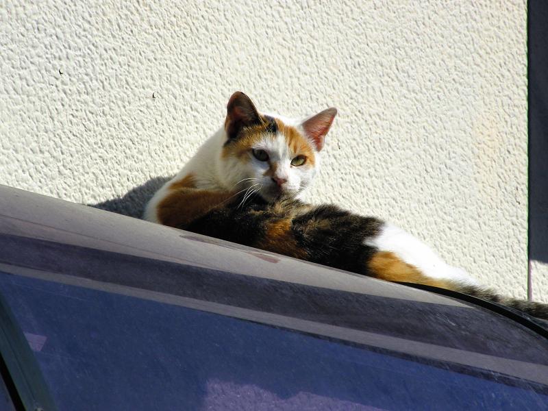 民家屋根と三毛猫2
