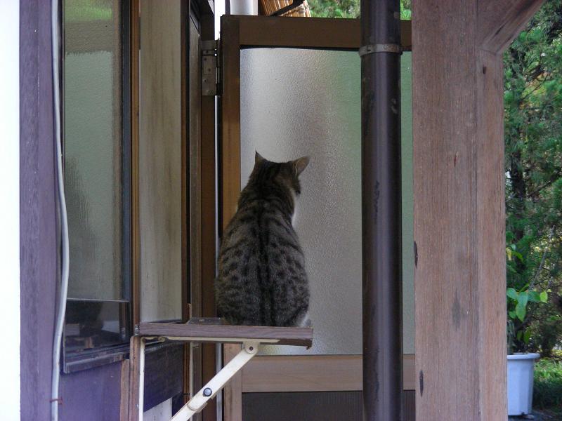 蕎麦屋店先の猫3