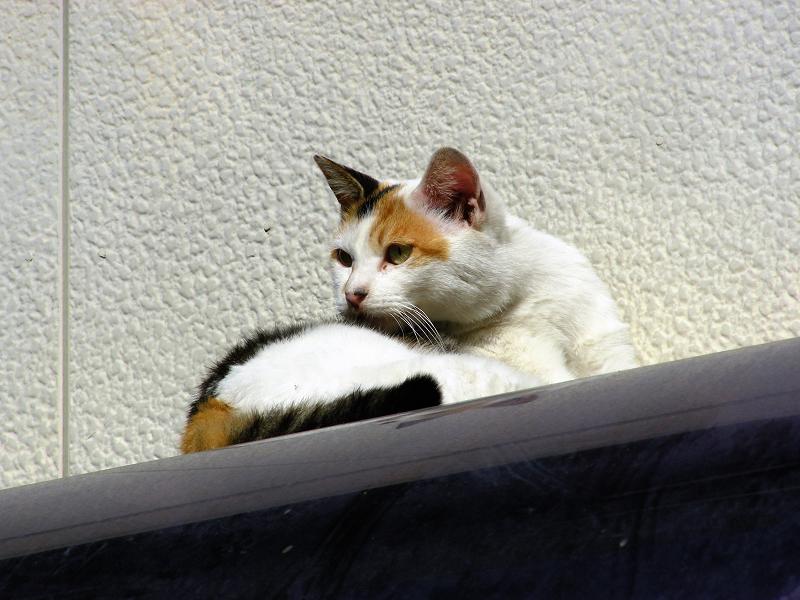 民家屋根と三毛猫3