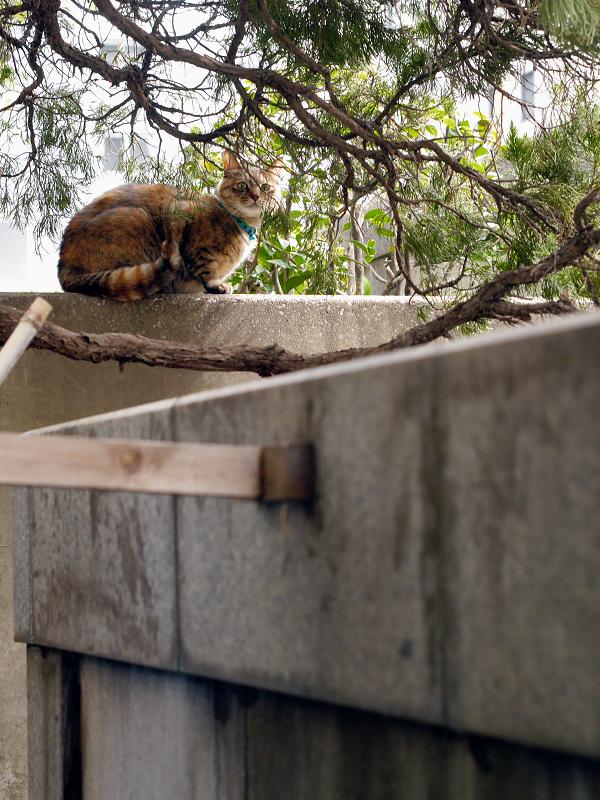 お寺に遊びに来た猫1