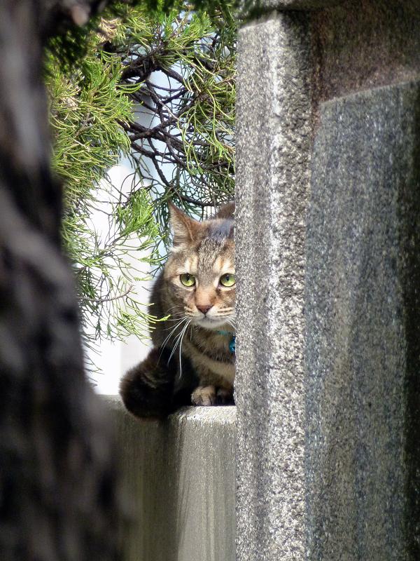 お寺に遊びに来た猫2