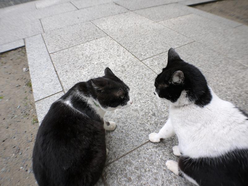 仲良しから一触即発の猫たち2