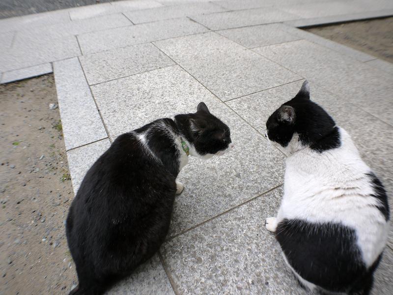 仲良しから一触即発の猫たち3