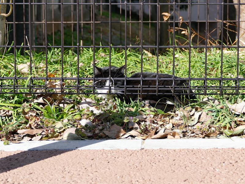 日差し空き地と黒白猫1