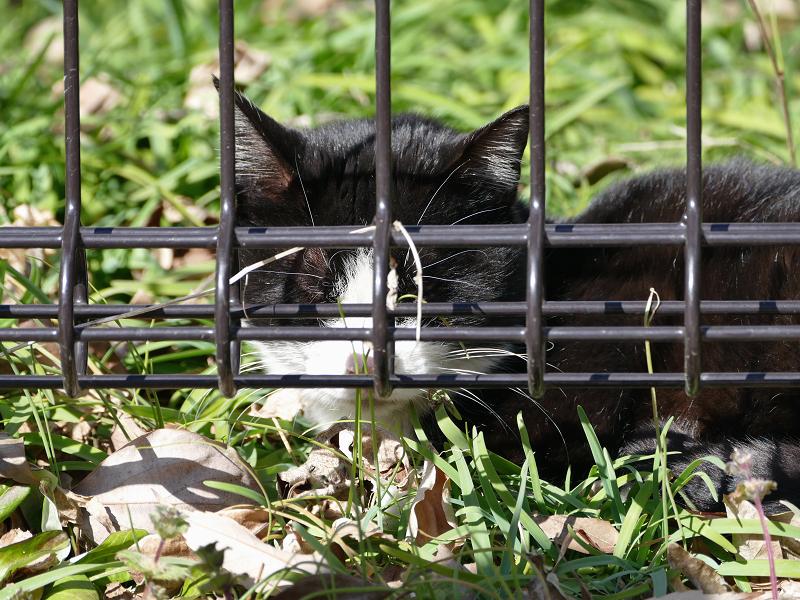 日差し空き地と黒白猫2