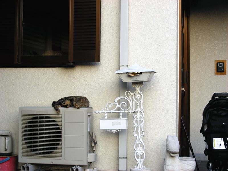 民家玄関室外機の上のキジトラ猫1