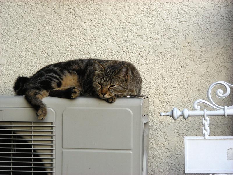 民家玄関室外機の上のキジトラ猫2
