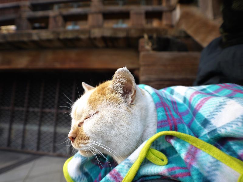 お寺の階段でフリースに包まってる茶白猫1
