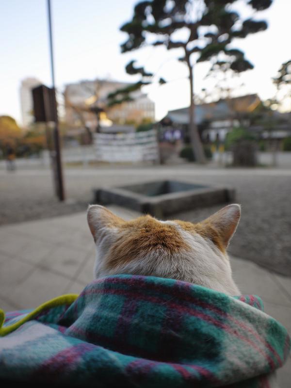 お寺の階段でフリースに包まってる茶白猫2