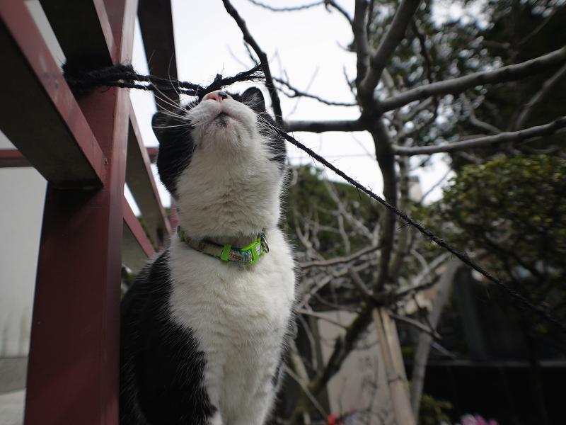 お堂の赤い手すりと黒白猫2