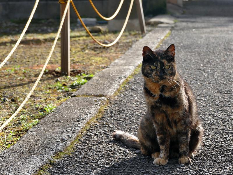 裏路地で何かを見ているサビ柄猫