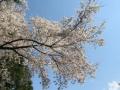 2017.4.13神奈川9