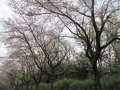 2017.4.17静岡