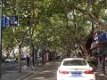 街中のプラタナス並木2