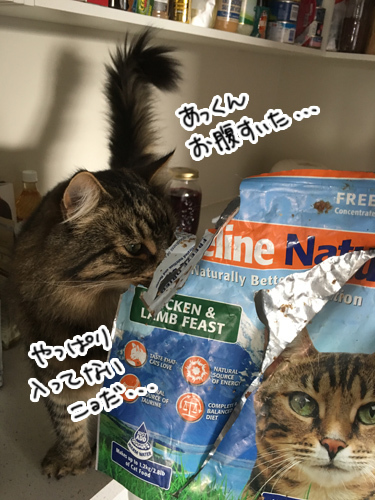 01042017_cat6.jpg