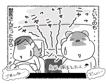 02032017_cat4.jpg