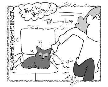 03032017_cat3.jpg