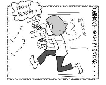 03032017_cat4.jpg