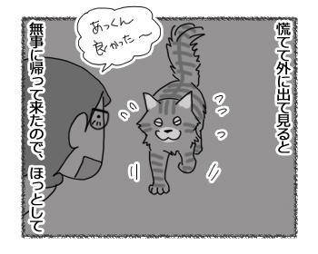06032017_cat2.jpg