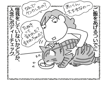 06032017_cat3.jpg