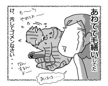 06042017_cat4.jpg