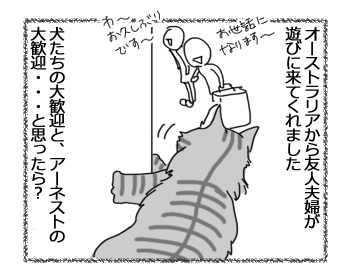 07032017_cat1.jpg
