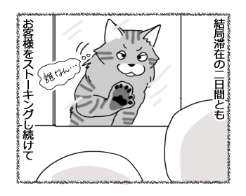 07032017_cat3.jpg