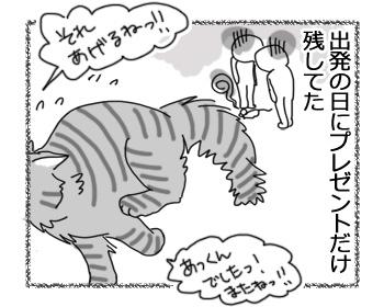07032017_cat4.jpg