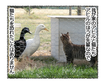 09032017_cat1.jpg